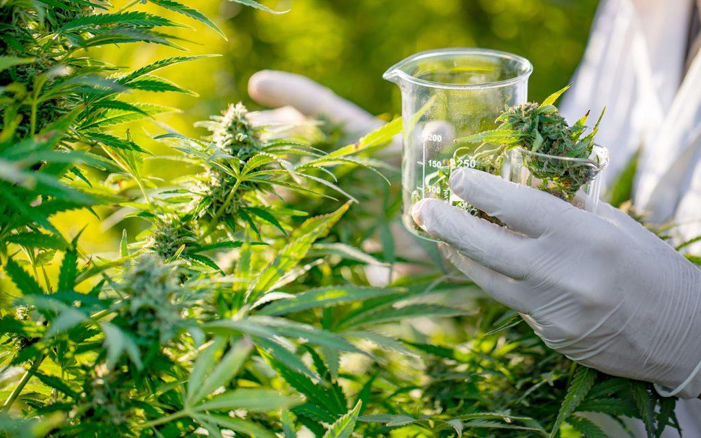 Toronto marijuana clinics